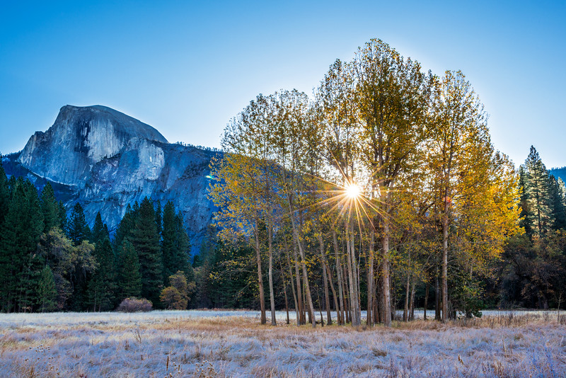 Frosty sunburst through Aspens with Half Dome in the background