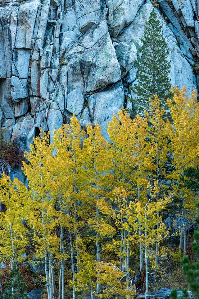 Aspens and Granite