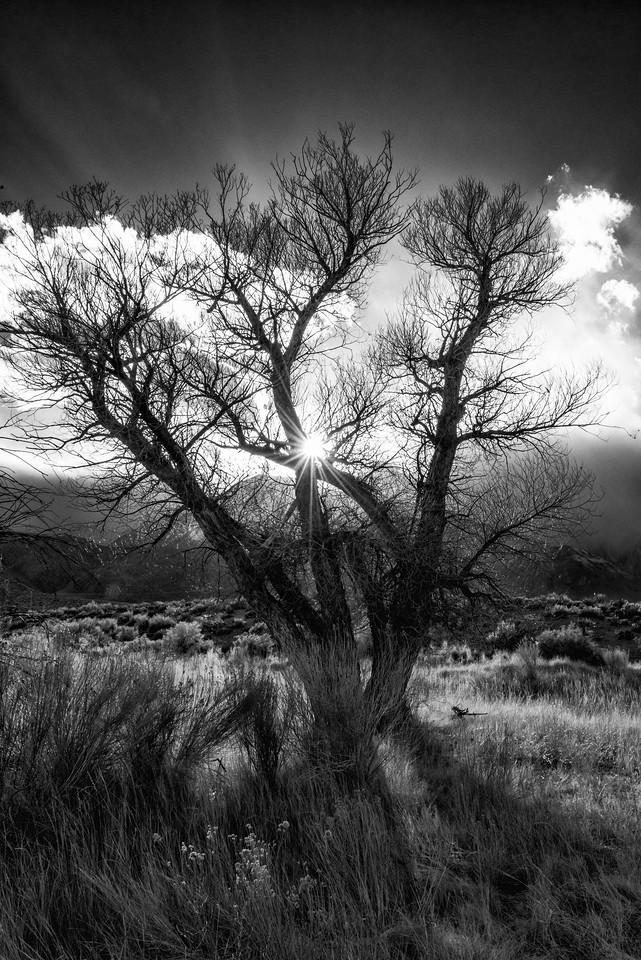Sunburst through the Storm in black and white