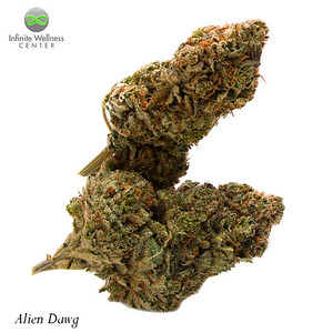 RDP_8940-Alien-Dawg