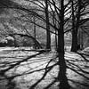 Silhouettes and Shadows, Neighborhood Park - Austin, Texas