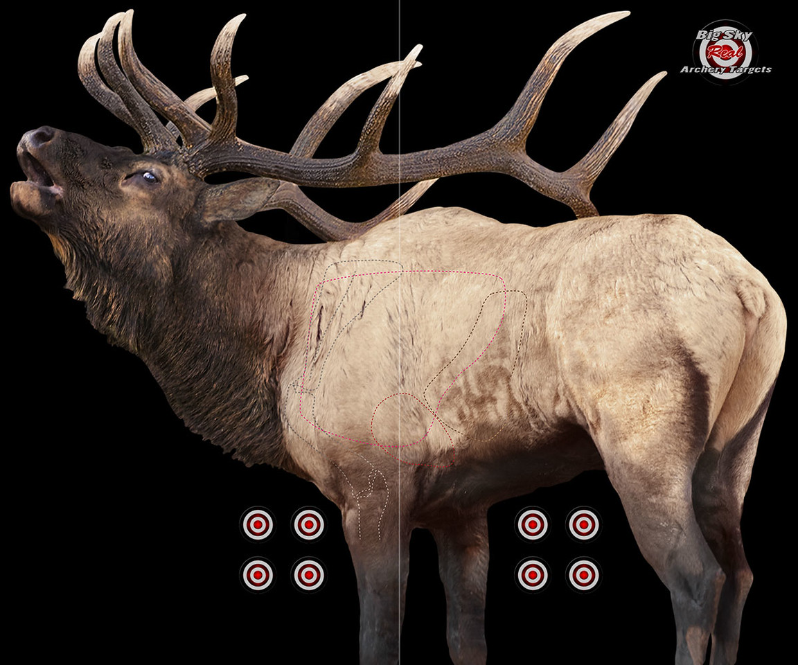 ROCKY MOUNTAIN ELK, BLACKOUT BACKGROUND