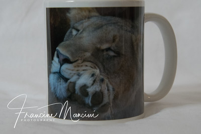cup from South African Lion photo