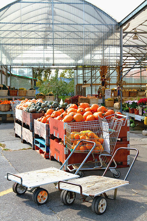 Pumpkins and carts at an outdoor farmers market