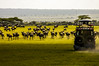The Great Wildebeest Migration, Serengeti, Africa