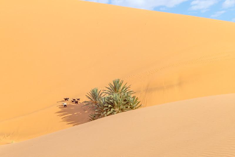 High Dunes