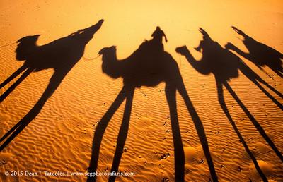 Camel Selfie