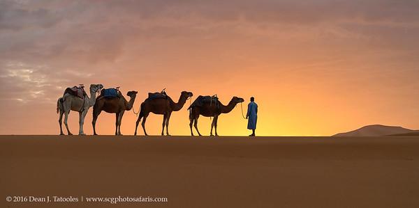 Morning Caravan
