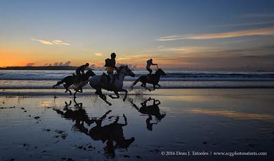 Arabian Stallions on the Beach
