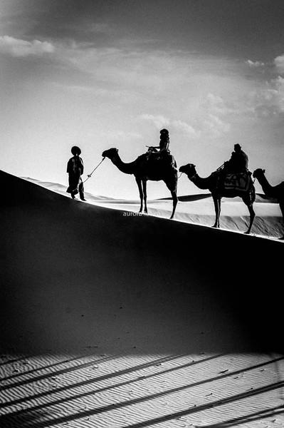 Saharan Silhouette