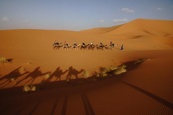 Camel Selfies