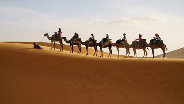 Camel Caravan - TGL