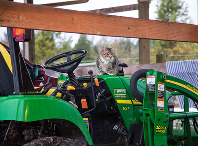 Barn cat and John Deere Tractor