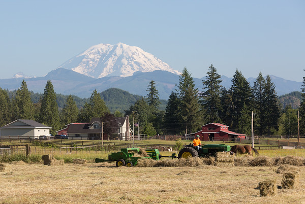 Making hay in the sunshine with Mount Rainier in the background.