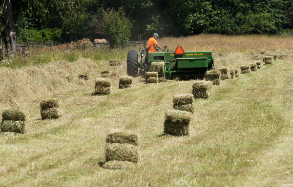 Making hay in the sunshine.
