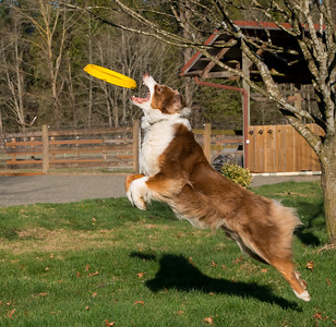 Rudy catching Frisbee