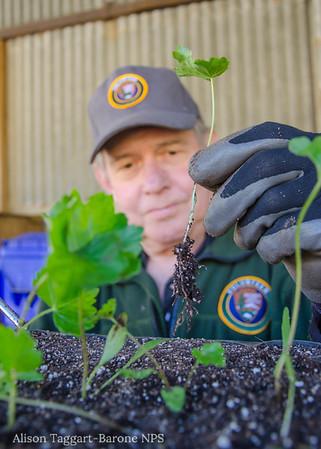 Senior volunteer with seedling