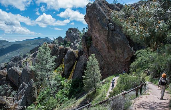 Trail at Pinnacles National Park