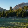 Lassen Volcanic Park meadow