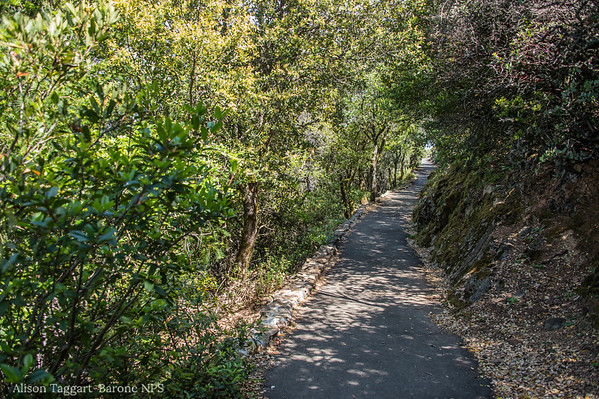 Mount Tamalpais trail