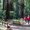 Cathedral Grove, Muir Woods. Photo by Alison Taggart-Barone NPS