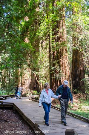 Muir Woods boardwalk. Photo by Alison Taggart-Barone NPS
