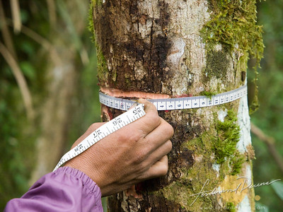 Forest Carbon Measurment