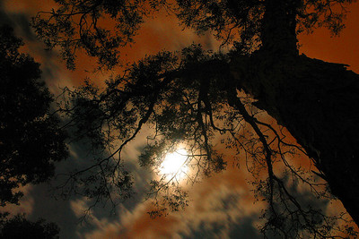 IMG_2459 Sky Moon Pecan Tree copy