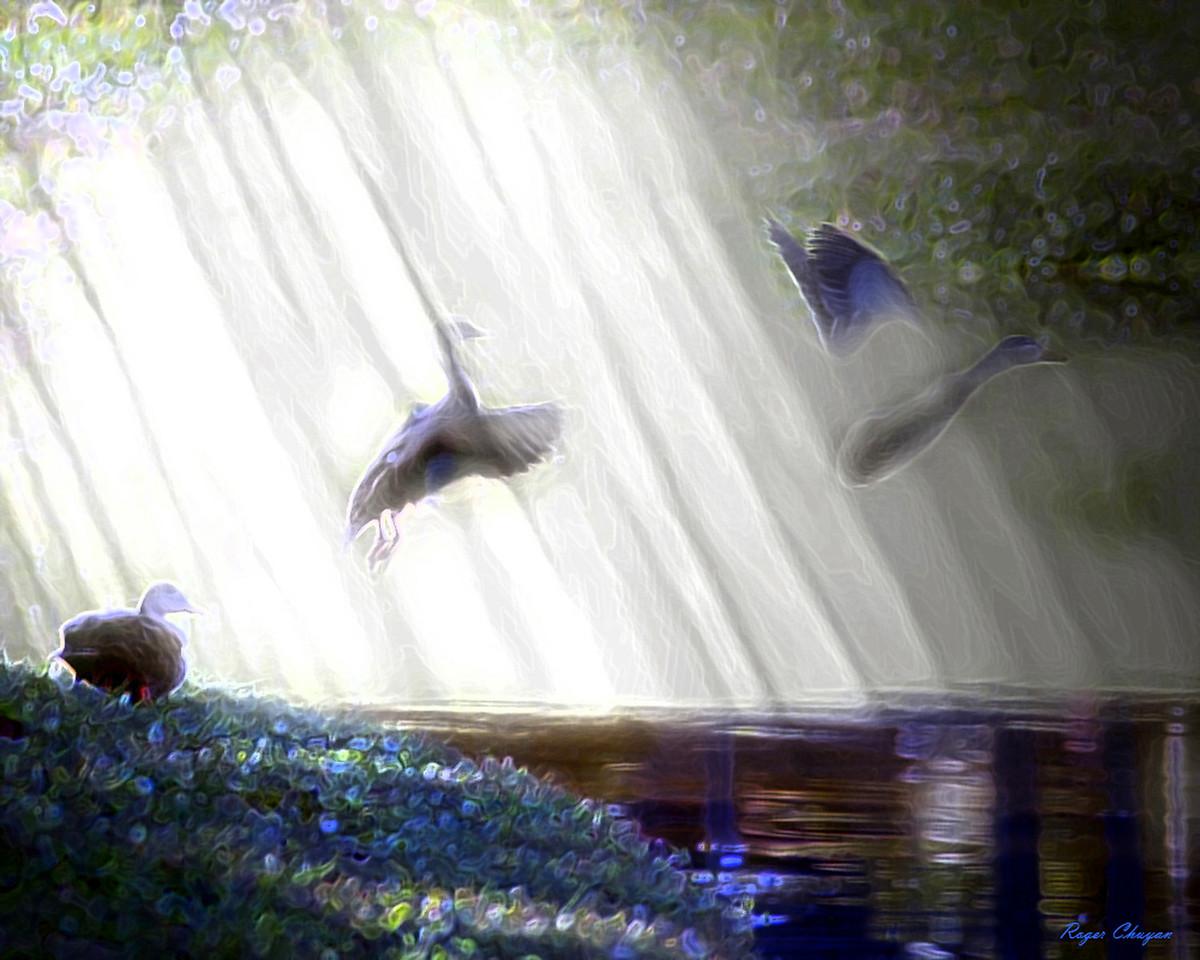 Ducks_filtered Fog ART