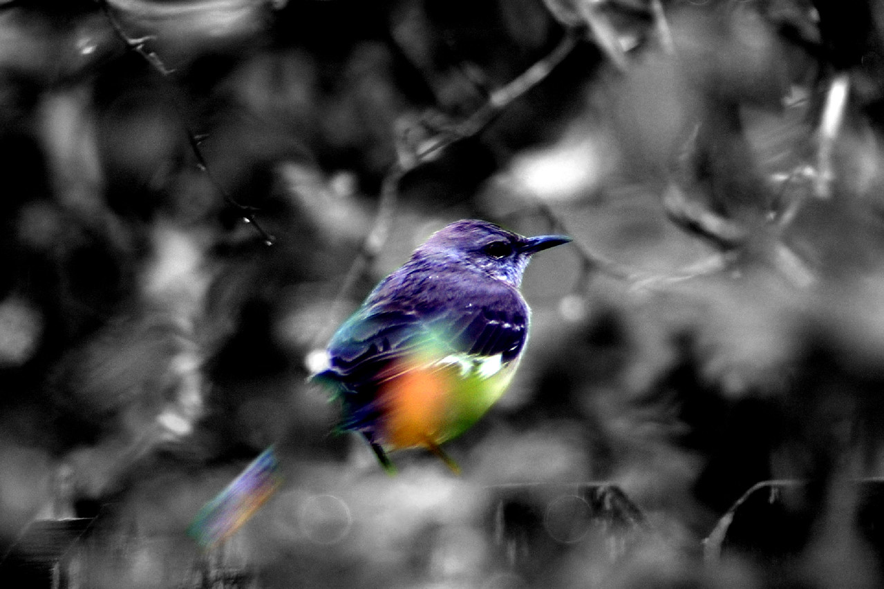 00058_RT16 Bird with B & W BackGrownd psd copy