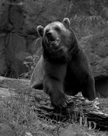 Don't make the grizzly bear angry.