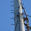 Guy wire bracket on tower