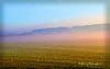 Field at Dawn2