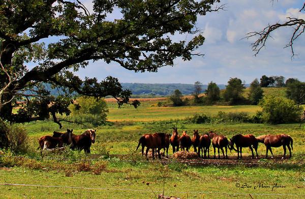 Horses6211-2