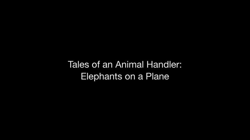 Tales of an Animal Handler compressed
