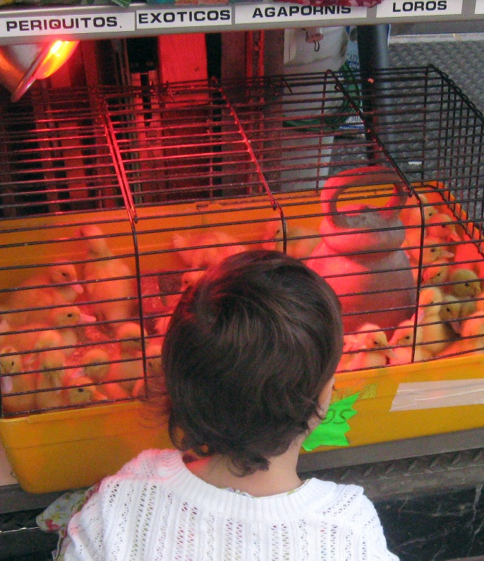 Also on La Rambla--bird sales!