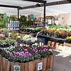 Elaine Pawlik (OSH Nursery Lead, Milpitas) - Arranging the floral section.