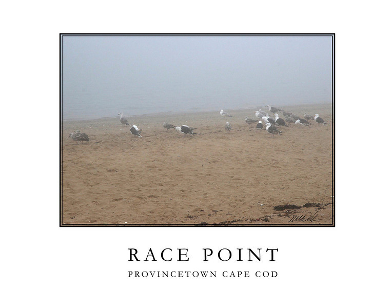 Race Point Beach Gulls