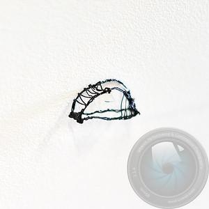 www.ipswich.photo