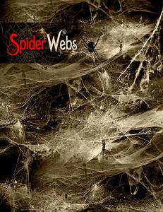 http://www.daz3d.com/rons-spider-webs
