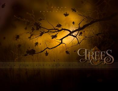 http://www.daz3d.com/ron-s-trees