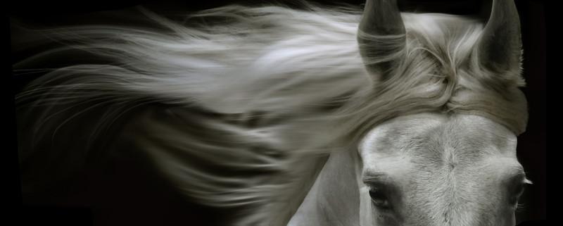 2013 OEF (Ontario Equestrian Federation) Membership card image.