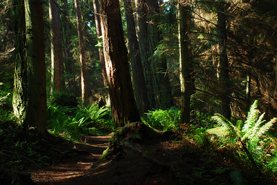 Forest Path One