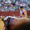 Bleeding bull looking at the matador. Taken during a bullfight at the Real Maestranza bullring, Seville, Spain, on 15 June 2006.