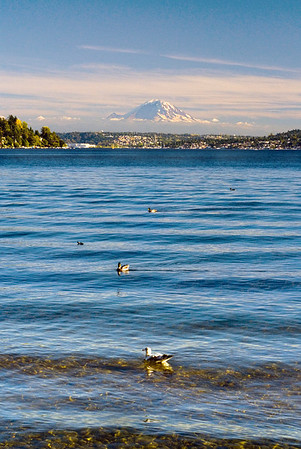 Shore birds in Seward Park, Seattle