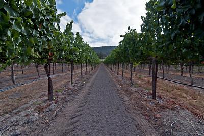 Block 19 - Pinot Noir