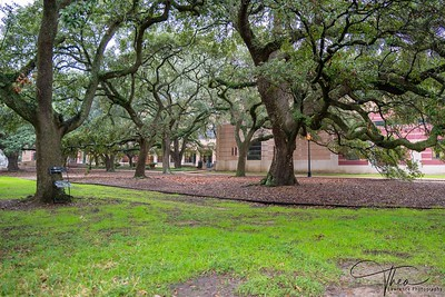 Rice University -Central Quadrangle