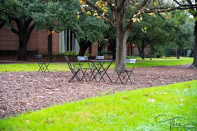 Rice University -West Quadrangle