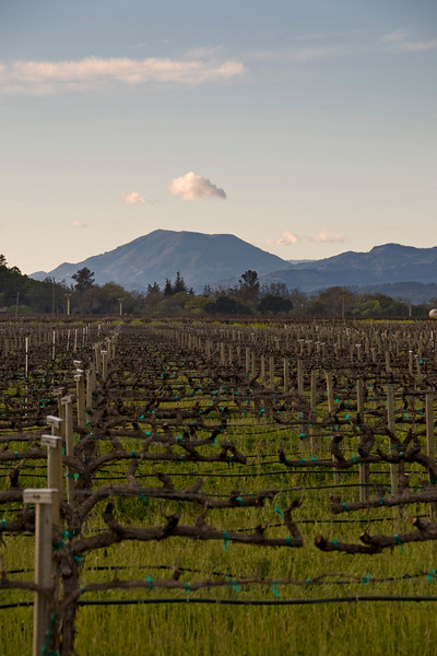 Yountville to Mt. St. Helena
