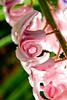 Morning rain on spring flowers